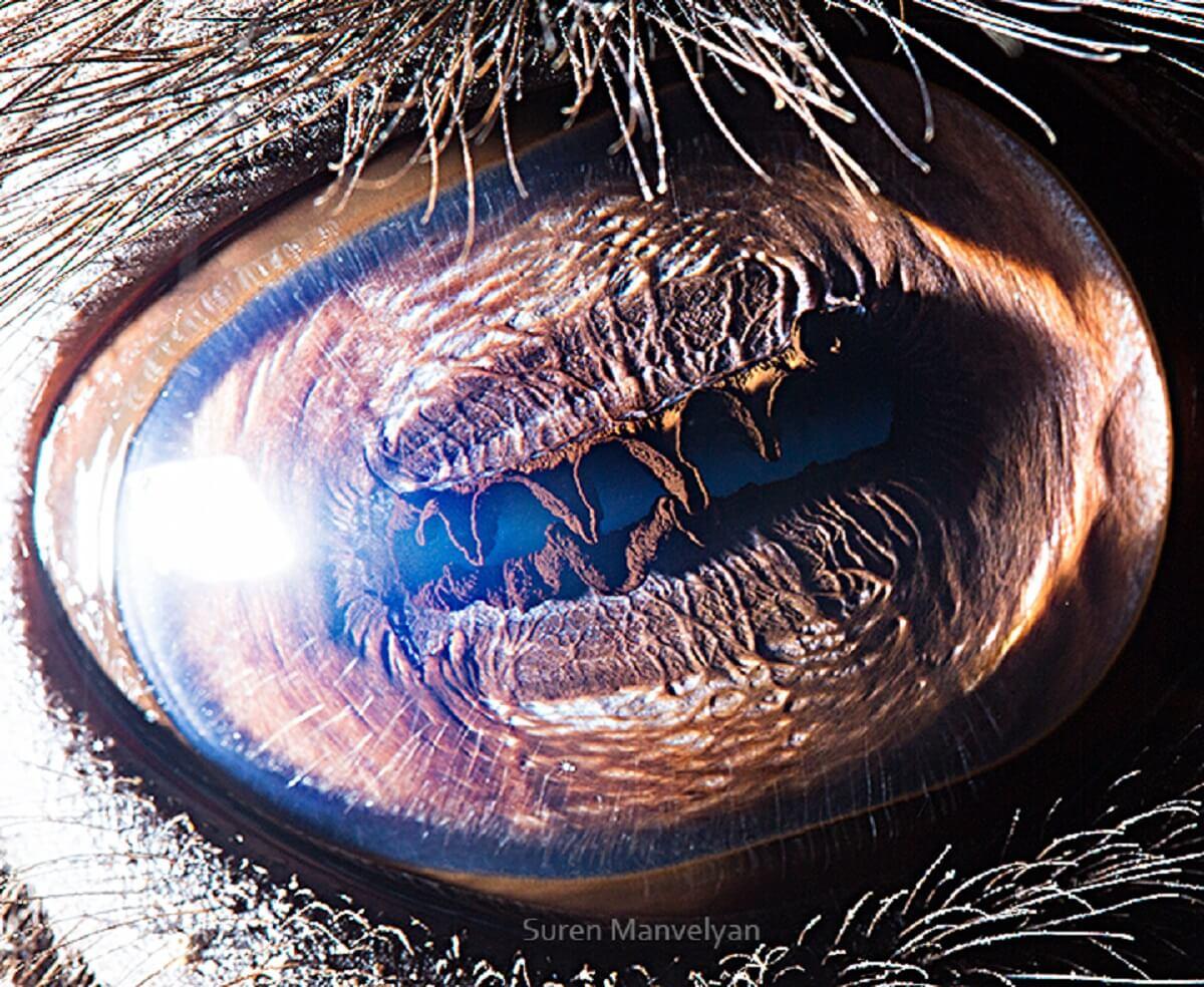 Eye of a camel, Suren Manvelyan