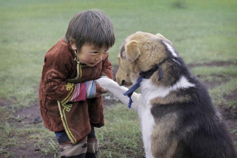 Τα δόντια ταΐζονται στον σκύλο.