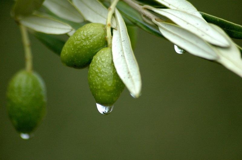 Η Εταιρεία Markellos Olive με μία κληρονομιά 4 γενεών...