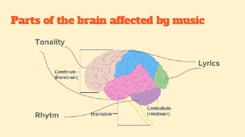 Οι περιοχές του εγκεφάλου που επηρεάζονται από την ακρόαση μουσικής