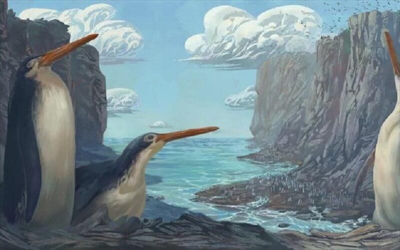 Αναπαράσταση των πιγκουίνων γίγας
